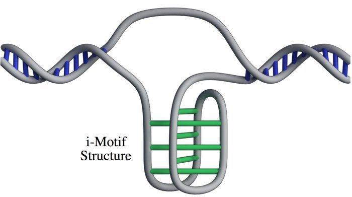 019 dna i motif structure living cells 1