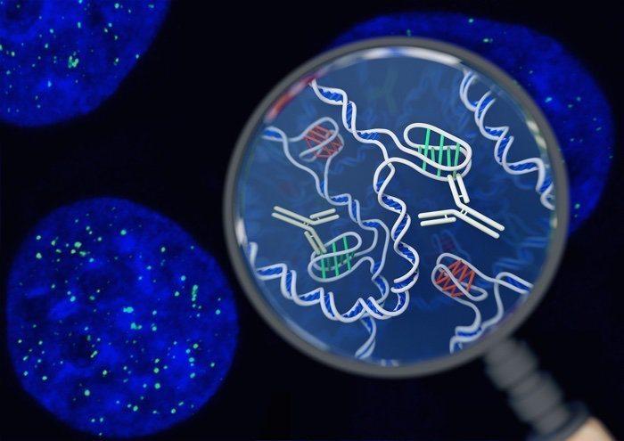 019 dna i motif structure living cells 2
