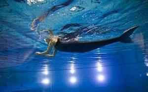 Nhờ đuôi bionic, người khuyết tật có thể bơi như nàng tiên cá.