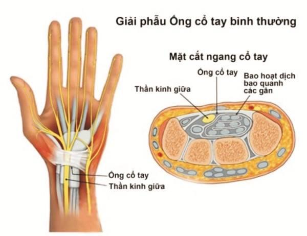 Giải phẫu ống cổ tay