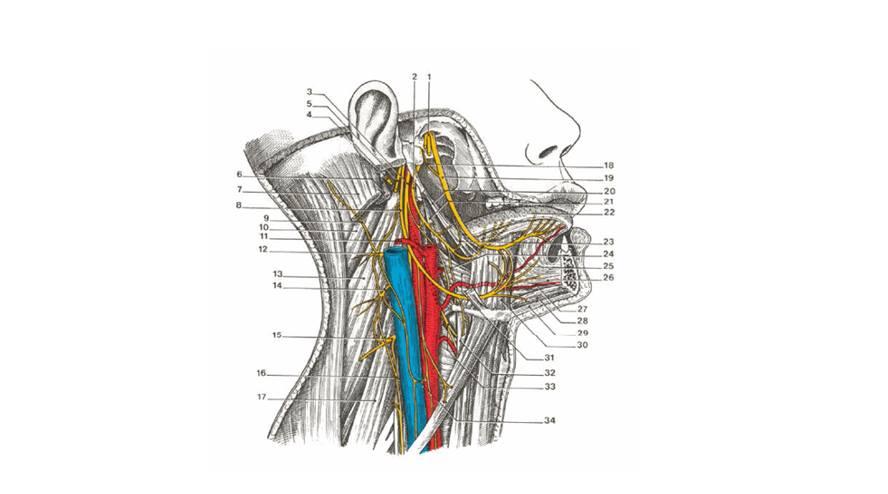 Một số phương pháp học tốt môn giải phẫu