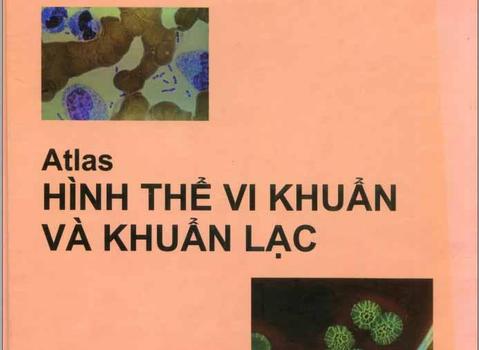 [PDF] Atlas hình thể vi khuẩn và khuẩn lạc - PGS.TS. Lê Văn Phủng