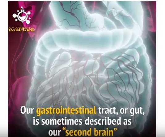 Bộ não thứ hai nằm ở đường ruột của bạn!