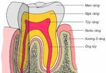 Phân biệt viêm lợi và viêm quanh răng, Cấu tạo răng và vùng quanh răng