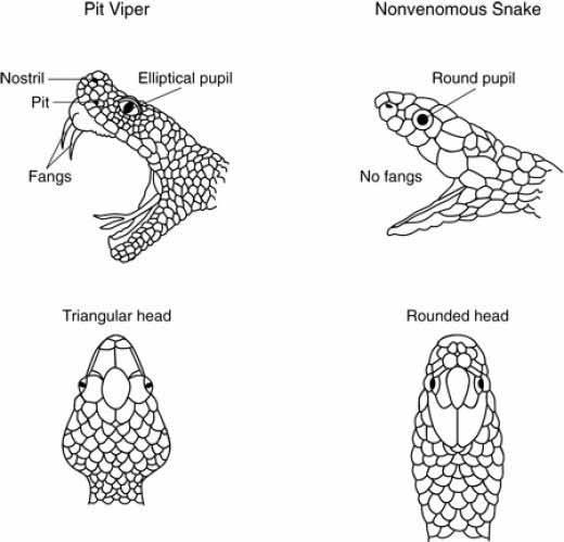 Chẩn đoán và điều trị rắn độc cắn