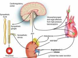 Hội chứng tim thận (Cardiorenal syndrome)